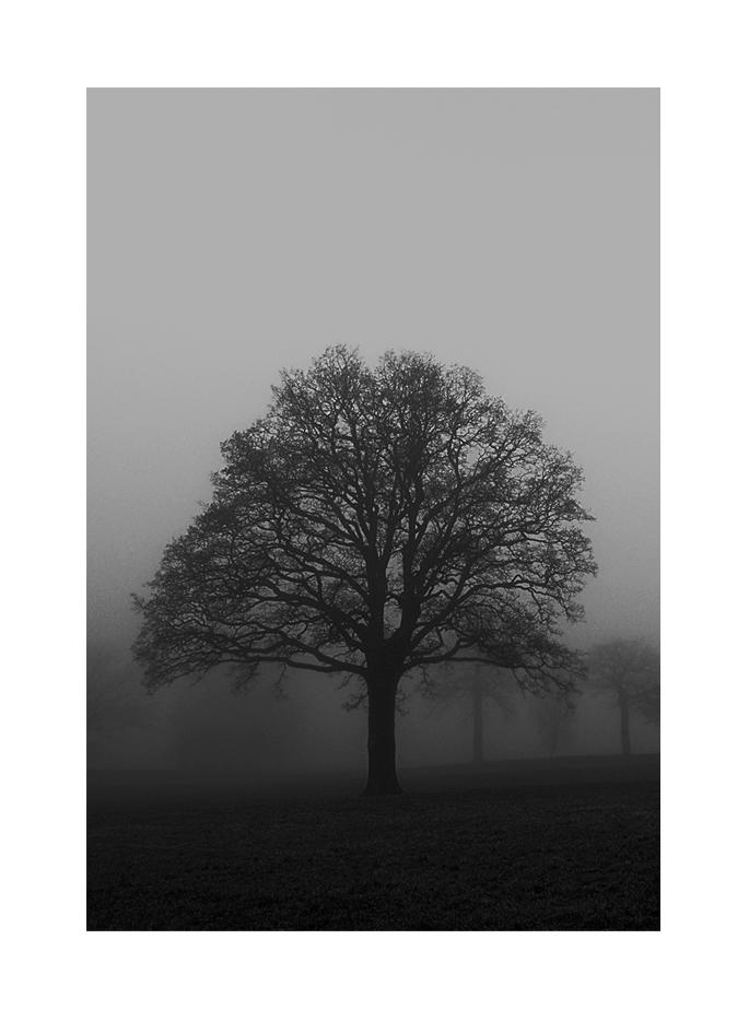 Träd i dimma_2