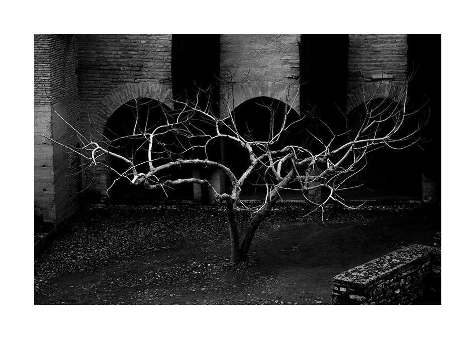 Träd inom murarna