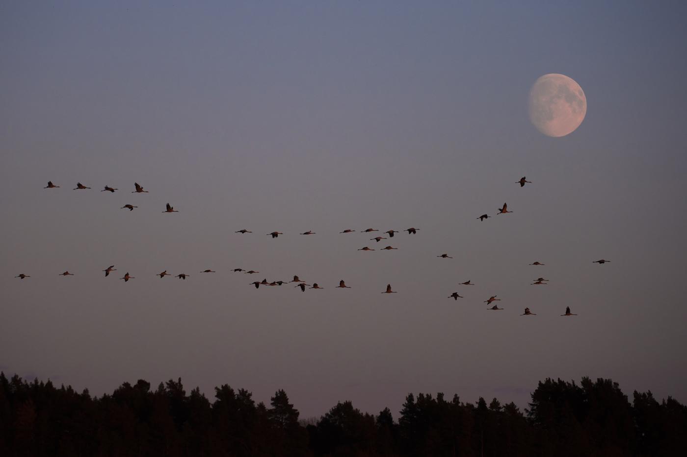 cranes_Galleri_2