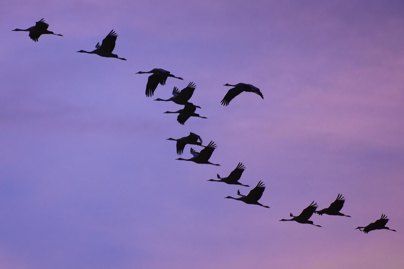 cranes_Galleri_3