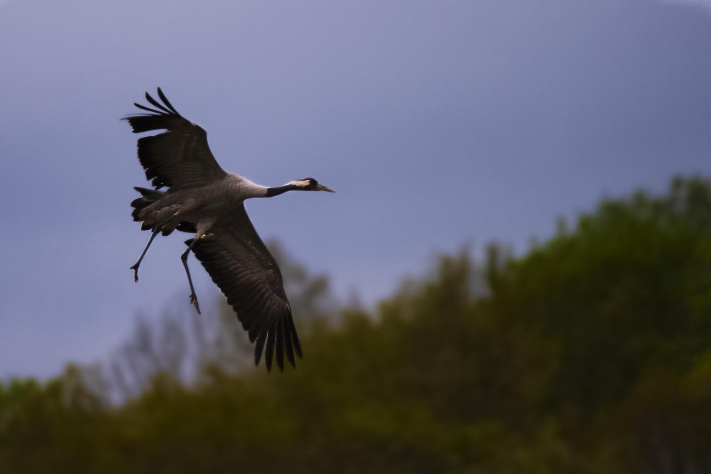 cranes_Galleri_4