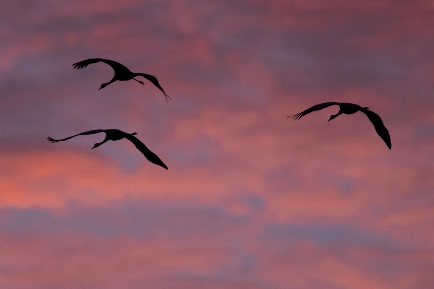 cranes_Galleri_6