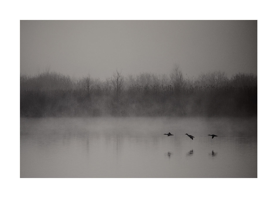 tre fåglar